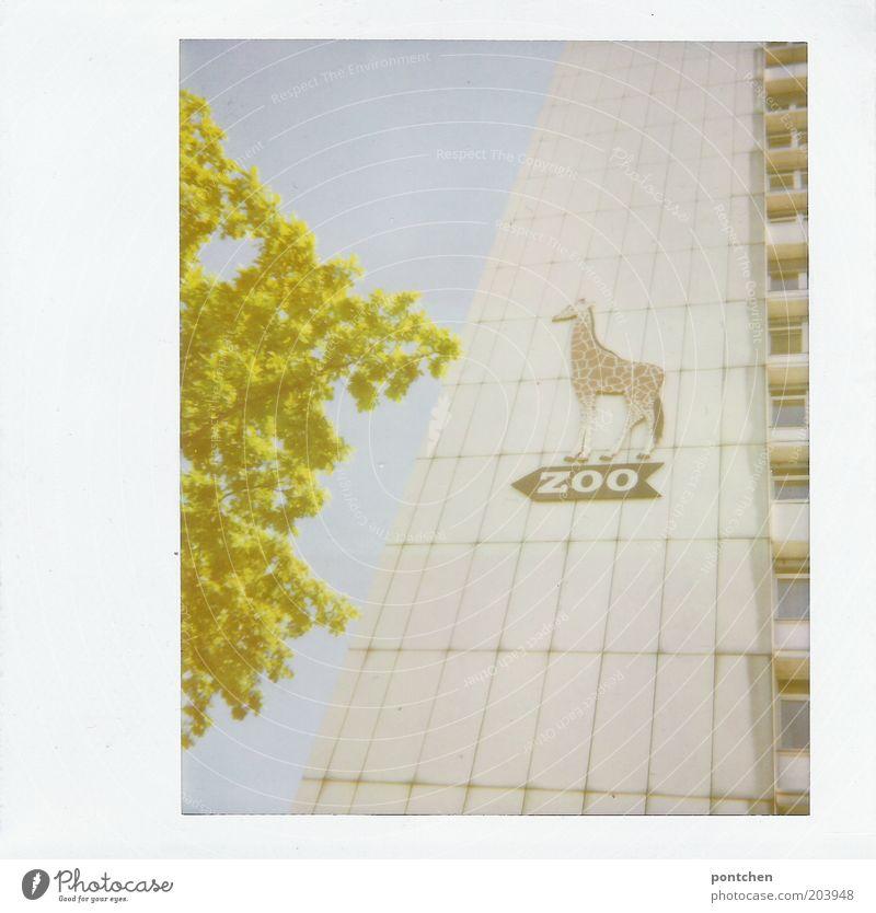 Hochhaus mit einem Wegweiser zum Zoo. Berliner Zoo. Haus Tier Giraffe Zeichen Schilder & Markierungen Richtung Pfeil Farbfoto Außenaufnahme Polaroid