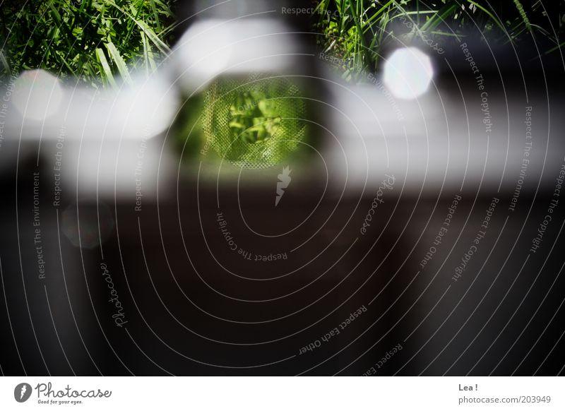 scharf stellen Fotografieren Fotokamera Umwelt Gras alt Kreativität Farbfoto Außenaufnahme Menschenleer Tag Sonnenlicht Zentralperspektive Sucher analog
