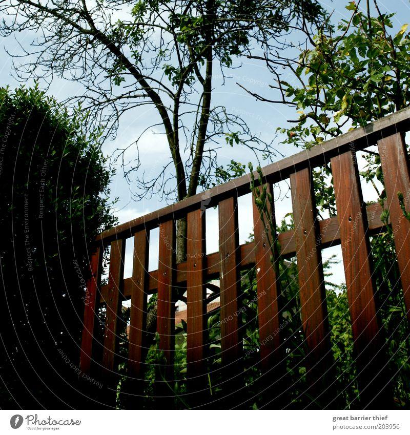 Als der Fotograf auf den Boden fiel ... Natur Baum Sommer Holz braun Sträucher Zaun Barriere Gartenzaun eingezäunt Holzzaun Grundstücksgrenze Nachbargarten