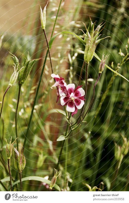 Farbtupfer Blume grün Pflanze Sommer Blüte violett Blühend Blütenblatt Grünpflanze Inspiration