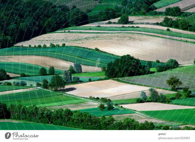 Natur-Fleckerlteppich Baum grün Pflanze ruhig Gras Frühling Landschaft braun Feld Umwelt Erde Ordnung Sträucher Schönes Wetter Ackerbau