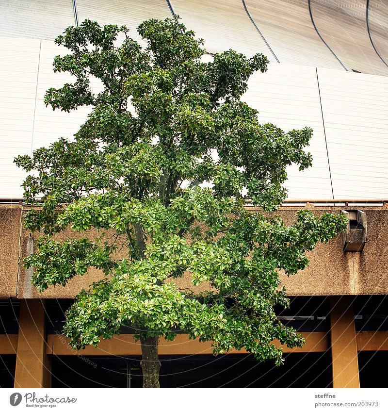 Stilmix Pflanze Baum New Orleans Haus Natur Farbfoto mehrfarbig Außenaufnahme abstrakt Louisiana Superdome New Orleans Superdom Halle
