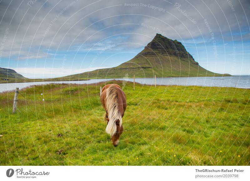 Pferd & Berg Umwelt Natur Landschaft blau braun grau grün Island kirkjufell Berge u. Gebirge Ferien & Urlaub & Reisen Attraktion Wiese Weide Isländer Mähne