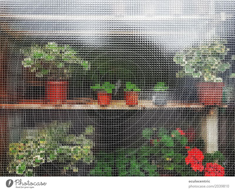 Anonyme Pflanzen Blume Business Fenster anonym grün rot Tisch Möbel Schrank Glas Blumentopf hinten sonnig Nizza schön doppelt m Farbfoto Menschenleer Licht