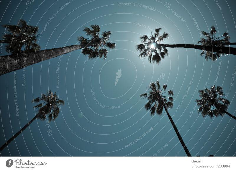 Unter Palmen (1) Natur Himmel Baum Sonne Pflanze Sommer Ferien & Urlaub & Reisen Blatt Umwelt hoch Wachstum Tourismus Klima leuchten Palme aufwärts
