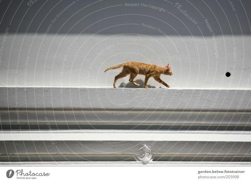 die Katze auf dem Dach Tier Haustier 1 Jagd braun Farbfoto Außenaufnahme Textfreiraum links Textfreiraum rechts Totale Tierporträt Blick nach vorn schleichen