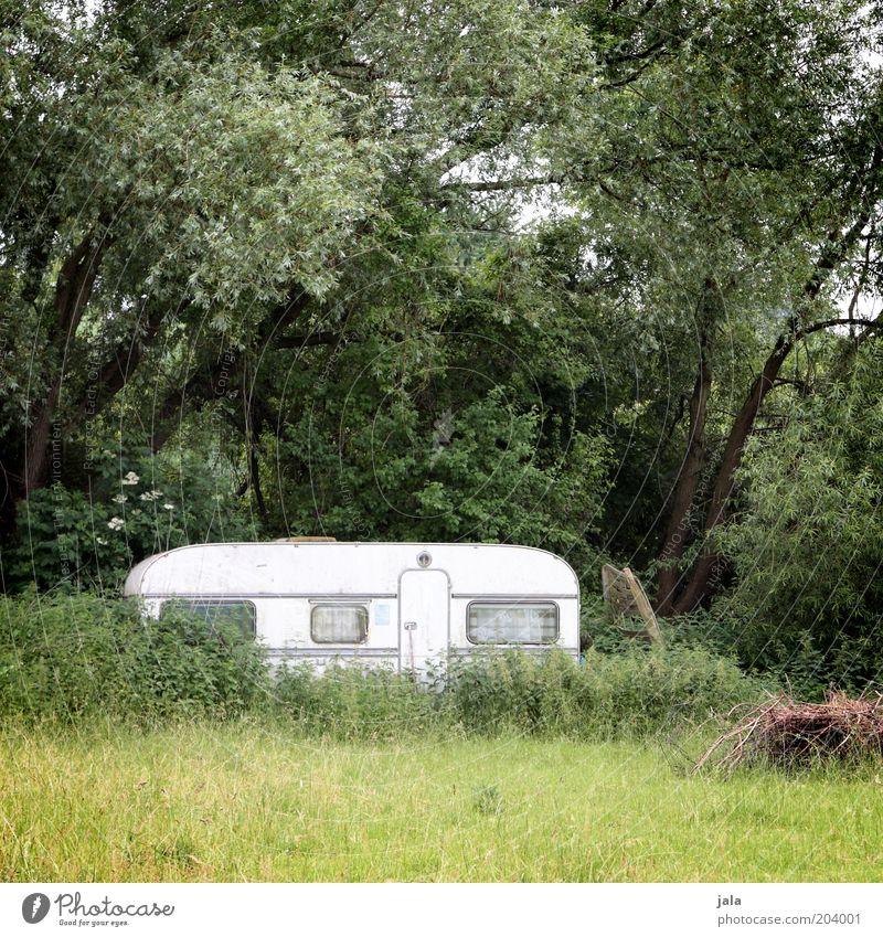 zufluchtsort wohnwagen Camping Natur Landschaft Pflanze Baum Gras Sträucher Wiese Wald Wohnwagen grün weiß Einsamkeit Wochenende Grundstück Farbfoto