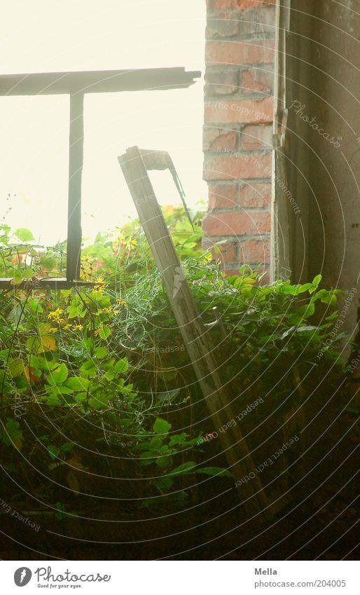 [H08.2] Was lange währt ... alt Wand Fenster Holz Stein Mauer Gebäude hell Stimmung Umwelt Zeit Wachstum Sträucher kaputt Vergänglichkeit verfallen