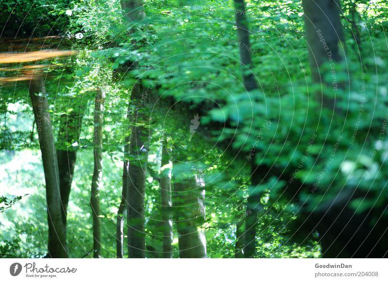 wo lang? da lang! III Natur Wasser Baum grün Pflanze ruhig Blatt Park Wärme Seeufer Spiegelbild Reflexion & Spiegelung Umwelt Wasseroberfläche Wasserspiegelung Teichufer