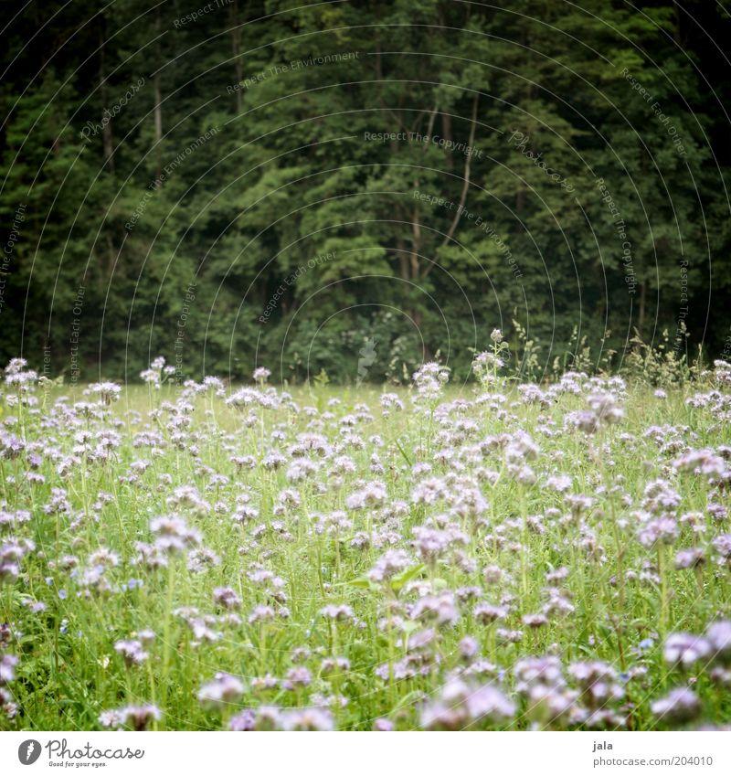 waldwiese Natur Landschaft Pflanze Baum Blume Gras Sträucher Wildpflanze Wiese Wald grün rosa Blumenwiese Farbfoto Außenaufnahme Menschenleer Tag Totale
