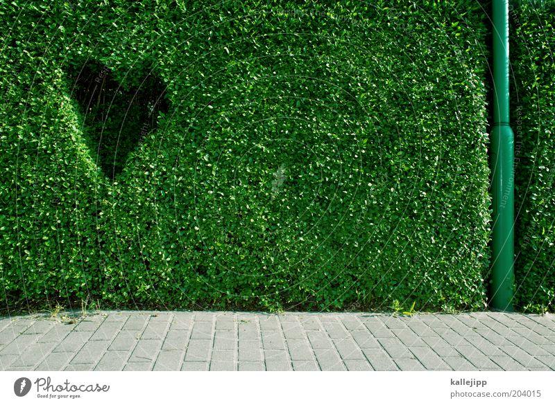naturliebhaber Design Glück Umwelt Pflanze Grünpflanze Hecke Buchsbaum Bürgersteig Herz Verliebtheit Umweltschutz Laternenpfahl Farbfoto mehrfarbig