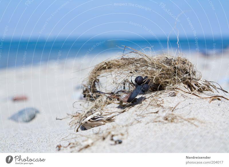Maritim Natur Meer Sommer Strand Ferien & Urlaub & Reisen ruhig Erholung Sand Stimmung Küste Tourismus authentisch natürlich Ostsee Schönes Wetter Algen