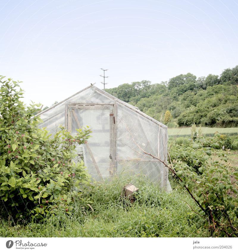 eigenbedarf Natur Himmel Baum grün Pflanze Gras Landschaft Sträucher Gewächshaus Landwirtschaft Garten Gärtnerei Gemüsegarten