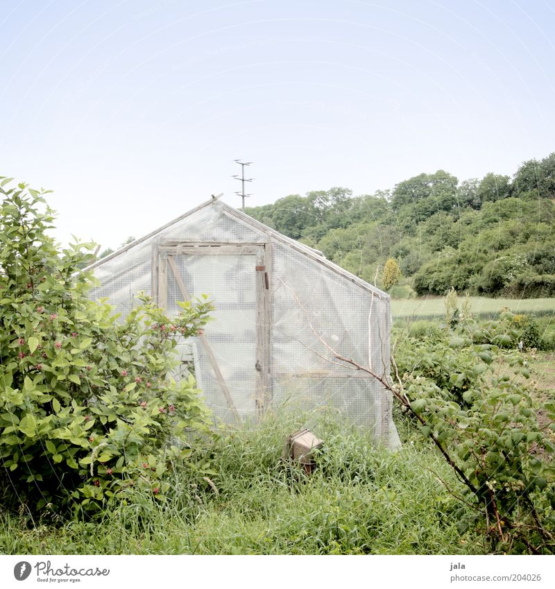 eigenbedarf Natur Landschaft Himmel Pflanze Baum Gras Sträucher grün Gemüsegarten Farbfoto Außenaufnahme Menschenleer Textfreiraum oben Tag Totale Gewächshaus