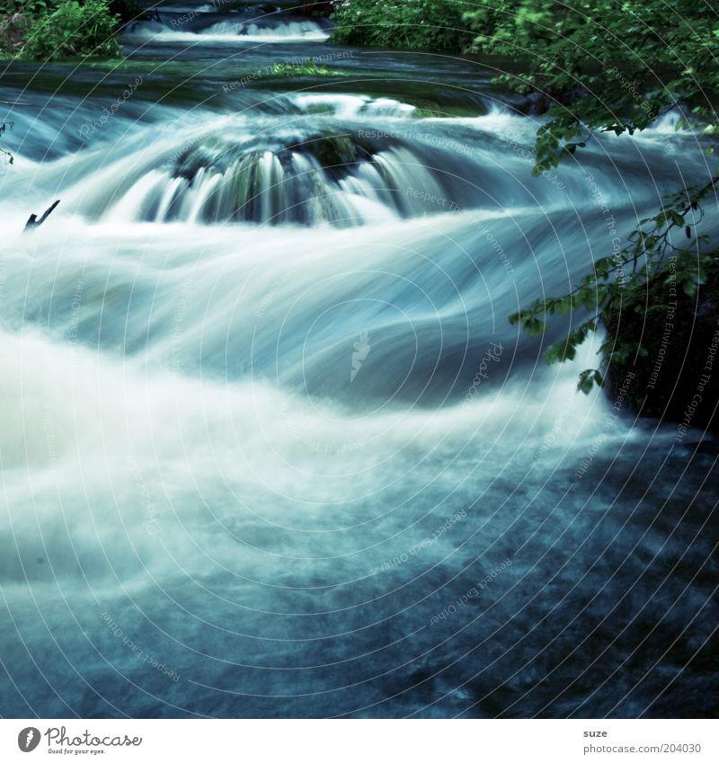 Triebwerk Umwelt Natur Landschaft Pflanze Wasser Park Urwald Flussufer Wasserfall Oase fantastisch nachhaltig nass natürlich wild blau grün Idylle Vogtlandkreis