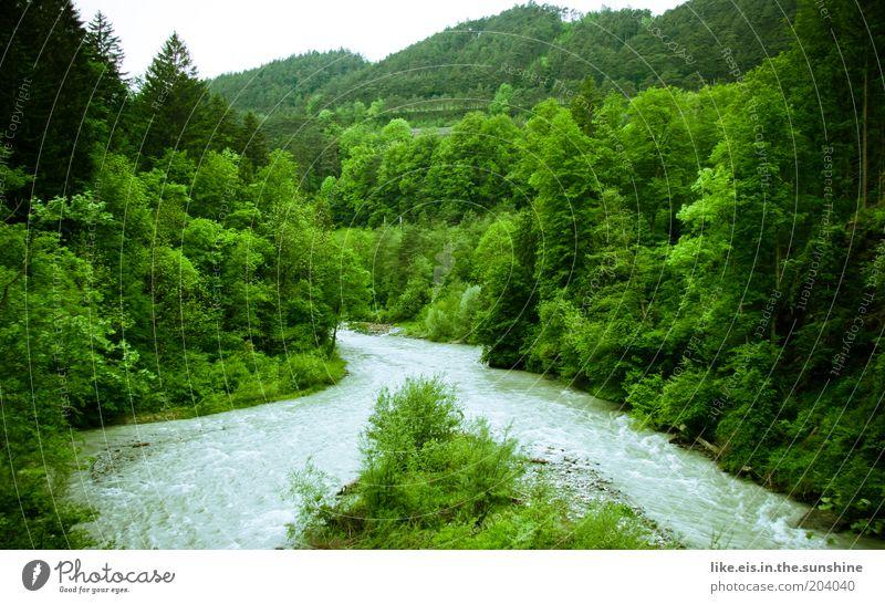 Es klappert die Mühle am rauschenden Bach Wasser schön Baum grün Pflanze Wald Insel Fluss Sträucher Hügel Urwald Flussufer harmonisch fließen Schlucht