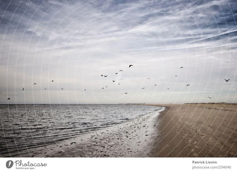 Die Vögel! Natur Wasser Himmel Meer Sommer Strand ruhig Wolken Ferne träumen Sand Landschaft Luft Vogel Wellen Küste