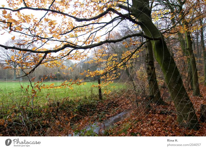 Herbst Natur Wasser Baum Pflanze Winter ruhig Blatt Wald Wiese Landschaft Stimmung Umwelt Wandel & Veränderung Bach November