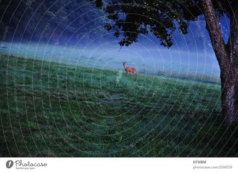 ein Reh Baum Tier Wald Wiese Landschaft Waldrand