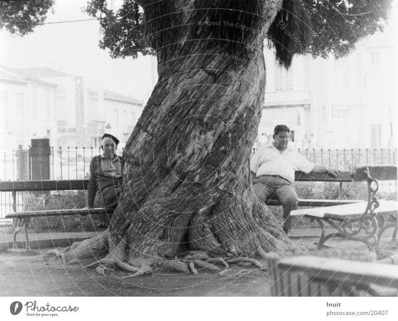 Baum Mann alt ruhig Europa Bank Mensch Portugal Mittag Azoren
