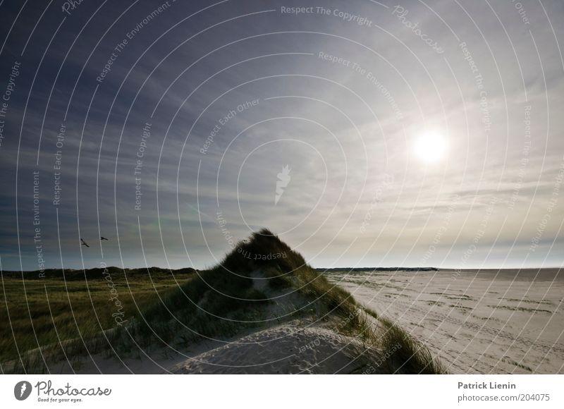 Zwei Seiten Umwelt Natur Landschaft Pflanze Tier Sonne Sommer Klima Klimawandel Wetter Schönes Wetter Wind Küste Strand Nordsee Meer Insel Spiekeroog Vogel
