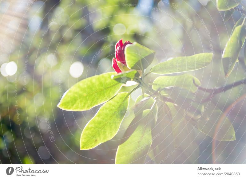 Frühling Sonne Blüte 2 Natur Pflanze Sommer schön grün rot Umwelt Wachstum