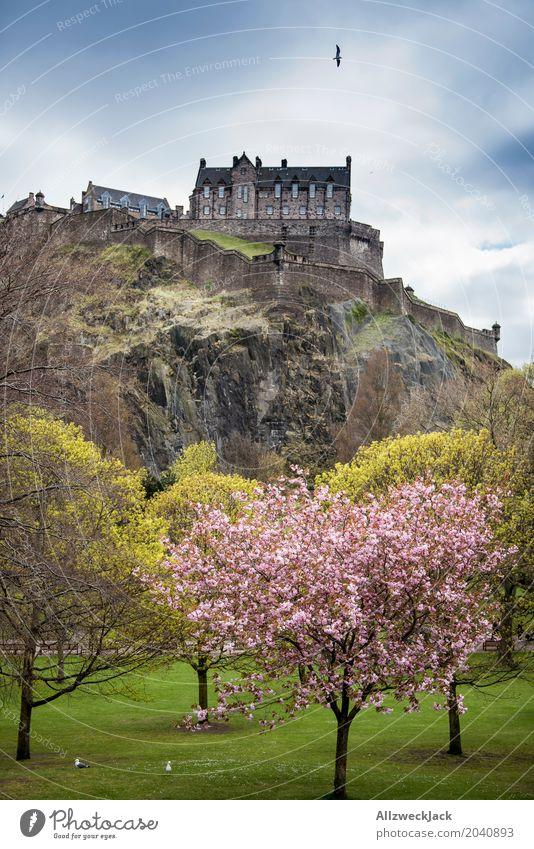 Edinburgh Castle Schönes Wetter Baum Kirschblüten Kirschbaum Felsen Schottland Hauptstadt Stadtzentrum Altstadt Burg oder Schloss Sehenswürdigkeit Wahrzeichen