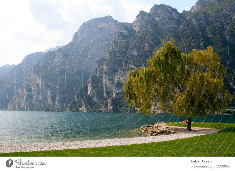 Impression Gardasee Landschaft Pflanze Wasser Sommer Baum Berge u. Gebirge Seeufer Italien Europa Einsamkeit Idylle Farbfoto Außenaufnahme Menschenleer