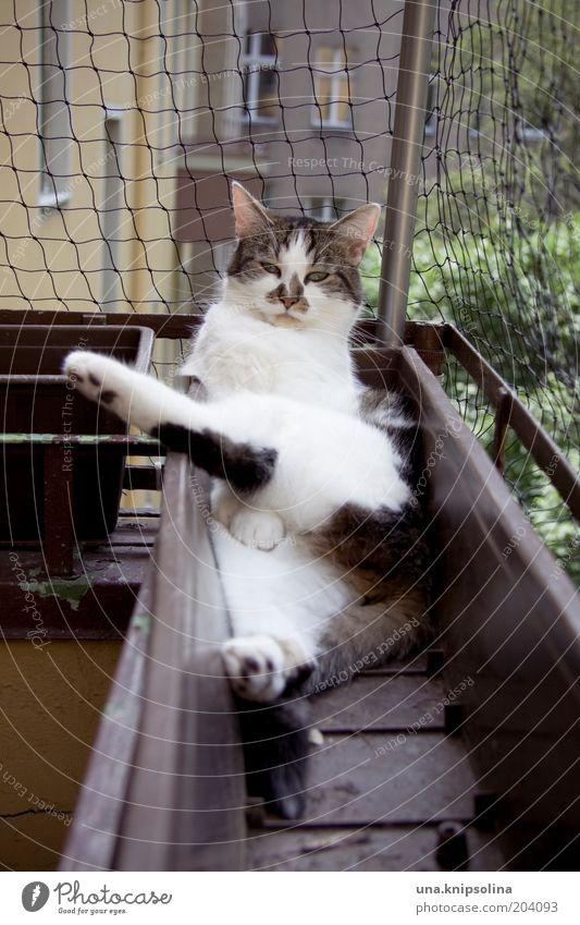 relax! Wohlgefühl Erholung ruhig Haustier Katze 1 Tier schlafen lustig Hauskatze Schlafplatz Blumenkasten Balkon Blick Farbfoto Außenaufnahme Tag
