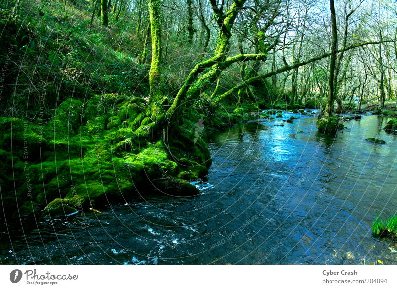 Galizische Wälder Natur Wasser grün blau Baum Pflanze Einsamkeit Wald ästhetisch Fluss Moos Flussufer Bach unberührt Wildpflanze