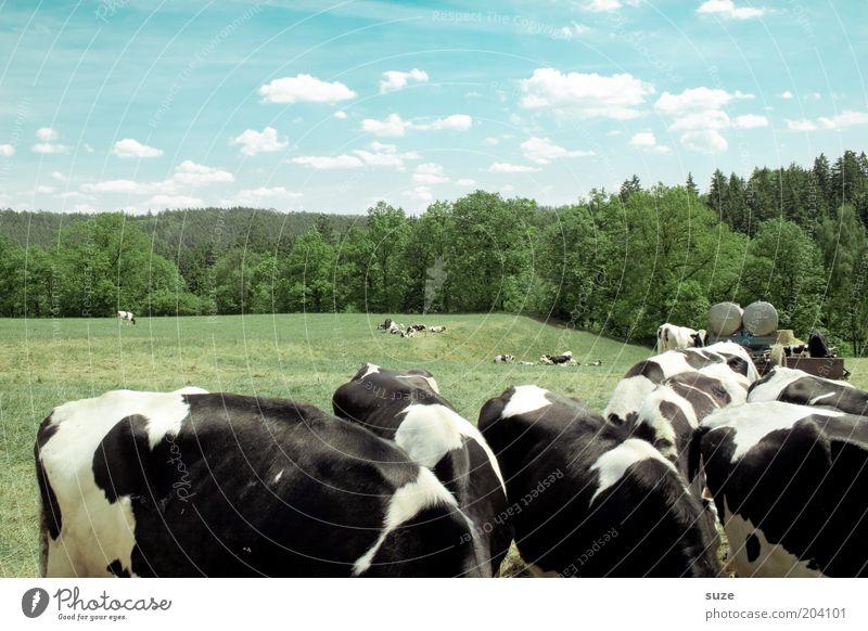 Bauernfrühstück Himmel Natur blau grün Sommer Tier Wolken Landschaft schwarz Wald Umwelt Wiese Feld natürlich Schönes Wetter Tiergruppe