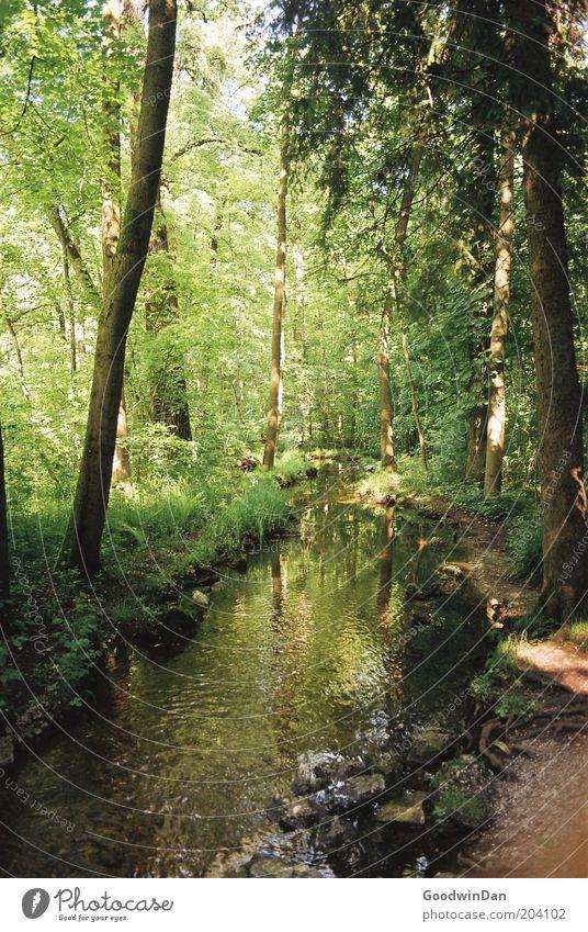 schöne Aussichten [analog] Umwelt Natur Pflanze Wasser Schönes Wetter Baum Gras Park Bach Wärme braun grün Farbfoto Außenaufnahme Menschenleer