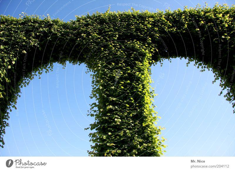 T grün Pflanze Blatt Garten Park verrückt Wachstum Sträucher Symbole & Metaphern Säule Hecke Gartenbau Bogen Efeu gekrümmt Schlosspark