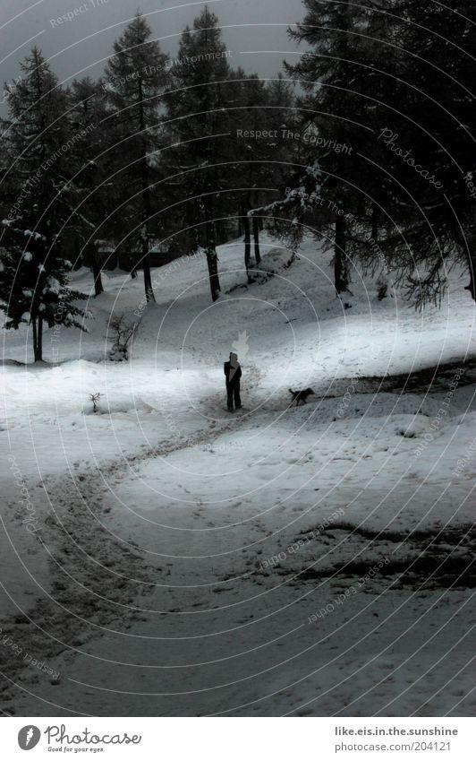 frauchen und der liebe schnee... Hund Mensch weiß Baum Einsamkeit ruhig schwarz Winter Wald dunkel kalt Schnee Park Spaziergang Hügel Fußweg