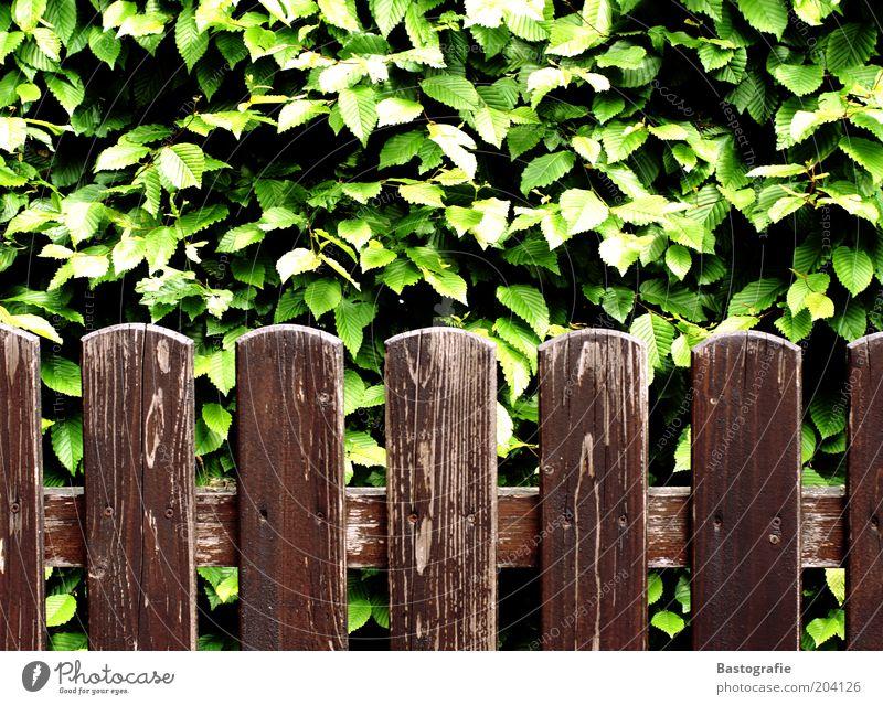 ab durch die Hecke Pflanze Blatt alt Gartenzaun Zaun Zaunpfahl morsch braun grün Holzstruktur Farbfoto Außenaufnahme Maserung Holzzaun Grundstücksgrenze