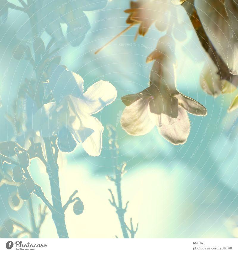 Wo komm ich her, wo geh ich hin? Natur schön blau Pflanze Sommer Blüte Frühling träumen Stimmung hell Umwelt Wachstum Gegenlicht natürlich außergewöhnlich Blühend
