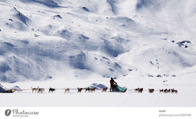 Tiefkühlkost Ferien & Urlaub & Reisen Tourismus Abenteuer Winterurlaub Mensch 1 Umwelt Landschaft Eis Frost Schnee Alpen Berge u. Gebirge Nutztier Hund Rudel