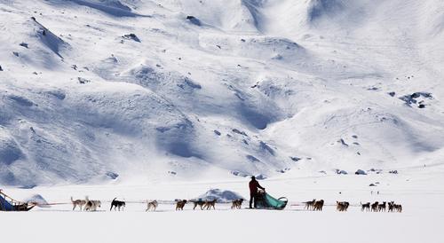 Tiefkühlkost Hund Mensch Ferien & Urlaub & Reisen weiß Winter Landschaft Umwelt Berge u. Gebirge kalt Schnee Bewegung hell Eis frisch Tourismus Abenteuer