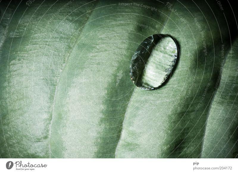/Ø/ Umwelt Natur Pflanze Wasser Blatt Tropfen Wassertropfen dunkel frisch glänzend nass grün Leben Oberflächenspannung Tau Photosynthese Pflanzenteile deutlich