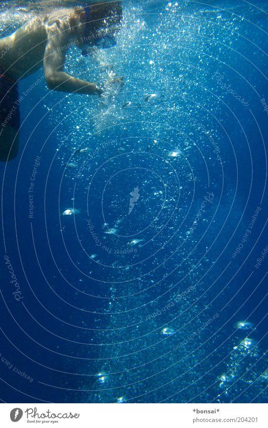 air-catcher Freizeit & Hobby Sommerurlaub Meer tauchen 1 Mensch Wasser Rotes Meer Badehose Schwimmen & Baden Flüssigkeit frisch nass natürlich blau Freude