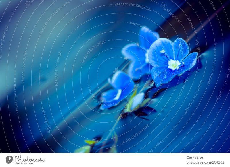 Natur Wasser blau Pflanze Sonne Sommer Blume dunkel Gefühle Garten Stimmung Wellen außergewöhnlich ästhetisch einfach schlechtes Wetter