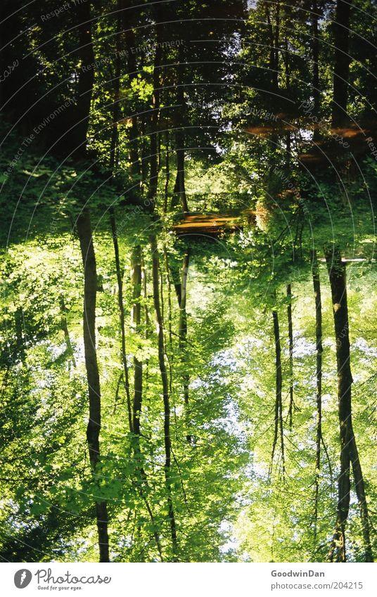 wo lang? da lang! IV Umwelt Natur Urelemente Wasser Schönes Wetter Pflanze Baum Park Bach außergewöhnlich schön Wärme braun grün Farbfoto Außenaufnahme