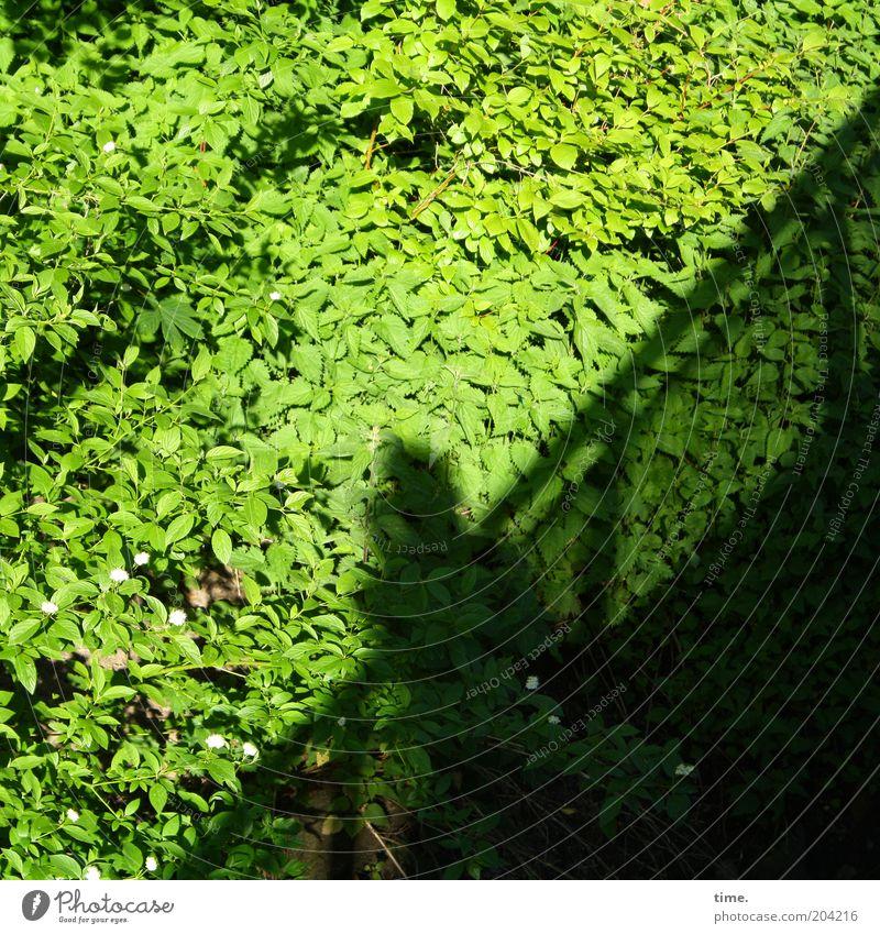 Waldsalattheke Mensch grün Pflanze Blatt Umwelt Wachstum Brücke Pause fantastisch diagonal Brückengeländer Botanik anlehnen Biologie üppig (Wuchs) Laubbaum