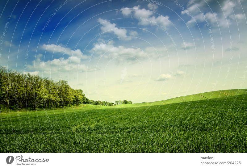 primavera Natur Landschaft Himmel Wolken Frühling Schönes Wetter Feld Wald blau grün Getreidefeld Landwirtschaft frisch Hügel sanft Farbfoto Außenaufnahme Tag