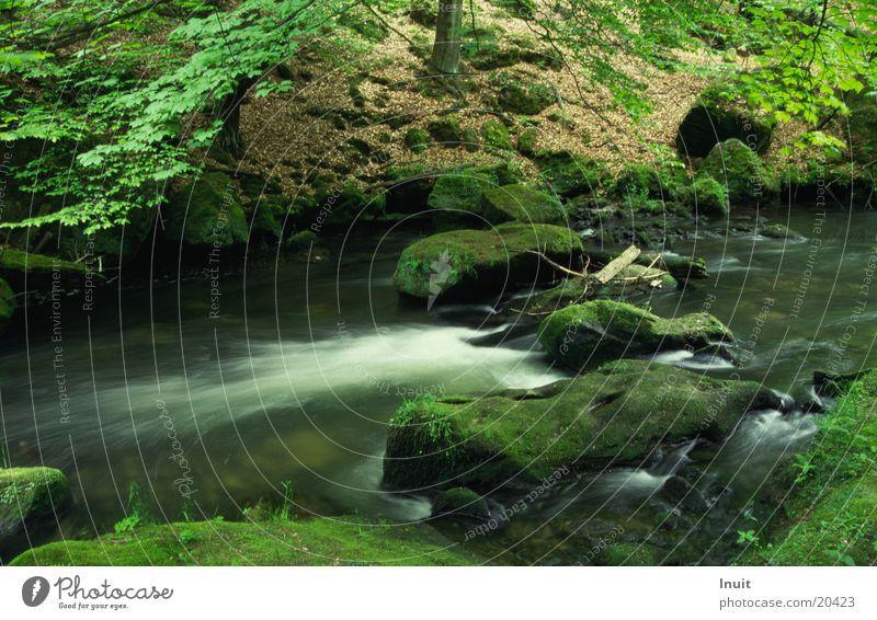 Wasser grün Stein Felsen Fluss Bach