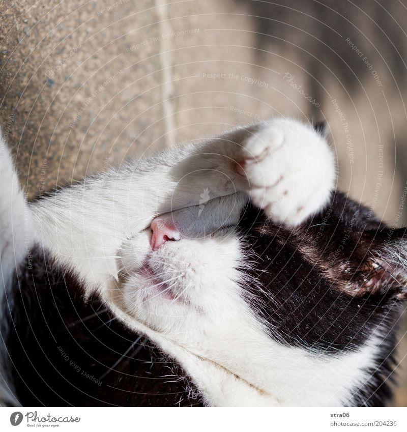 wolfgang in der sonne weiß ruhig schwarz Tier Katze Zufriedenheit schlafen Schutz Fell Warmherzigkeit Gelassenheit Sonnenbad Ferien & Urlaub & Reisen Pfote