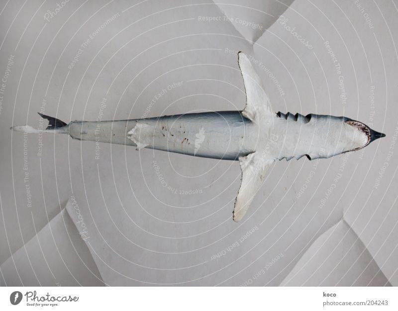 High-Fisch Meer Wasser Totes Tier Haifisch 1 fliegen ästhetisch außergewöhnlich bedrohlich oben blau schwarz weiß Kraft Gedeckte Farben Menschenleer Tag