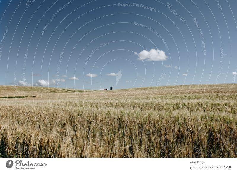dänische Idylle Natur Ferien & Urlaub & Reisen blau Sommer Landschaft Wolken Haus Ferne Umwelt gelb Freiheit Tourismus braun Ausflug Feld