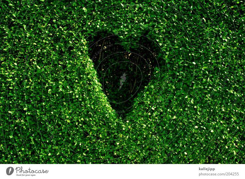naturfreund Umwelt Natur Pflanze Klima Klimawandel Blatt Grünpflanze Zeichen Herz nachhaltig Design Umweltschutz grün Buchsbaum Hecke geschnitten Loch Farbfoto