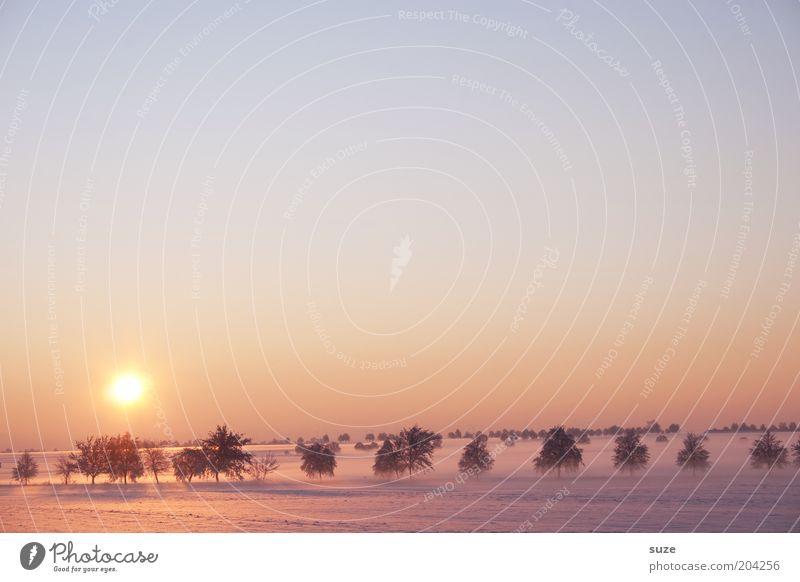 Vorstellung Himmel Natur Baum Sonne Einsamkeit Winter Landschaft Umwelt kalt Schnee Horizont außergewöhnlich Feld Klima Nebel ästhetisch
